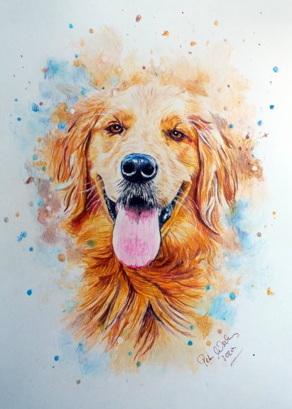 Golden Retriver3.mini